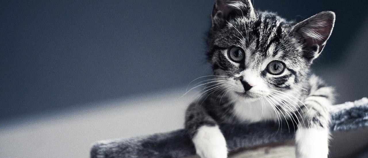 Happy-Cat-slider_01